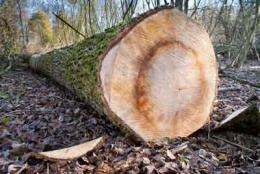Grading Logs To Lumber