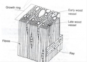 About Wood Logs To Lumber